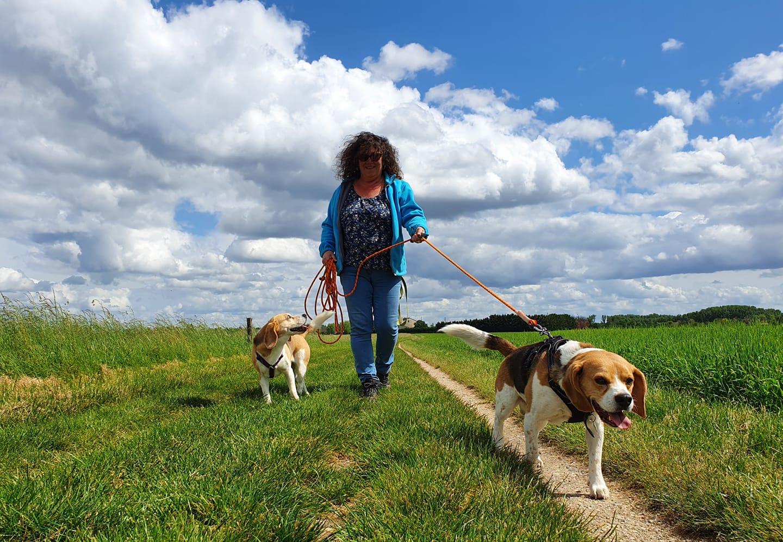 service promenade de chien