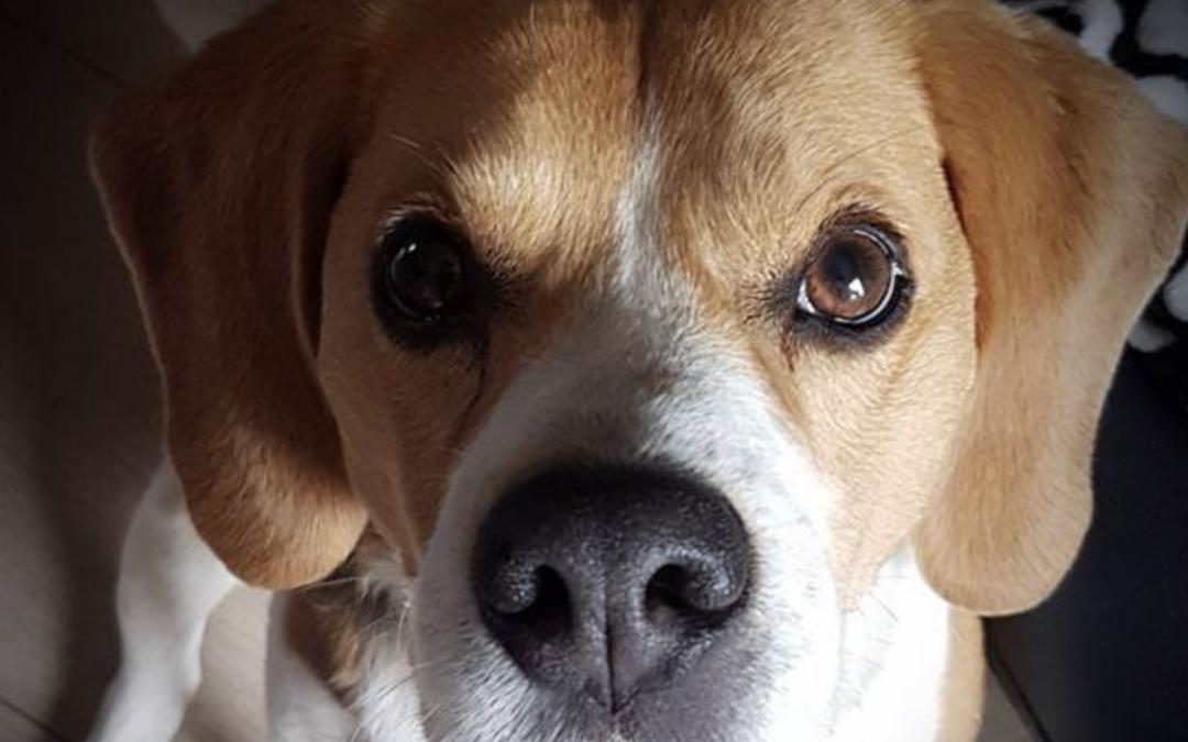 Logique de chien - éducation canine