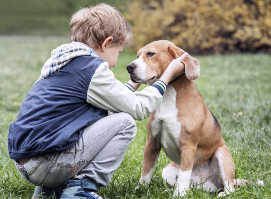 éducation du chien par l'enfant